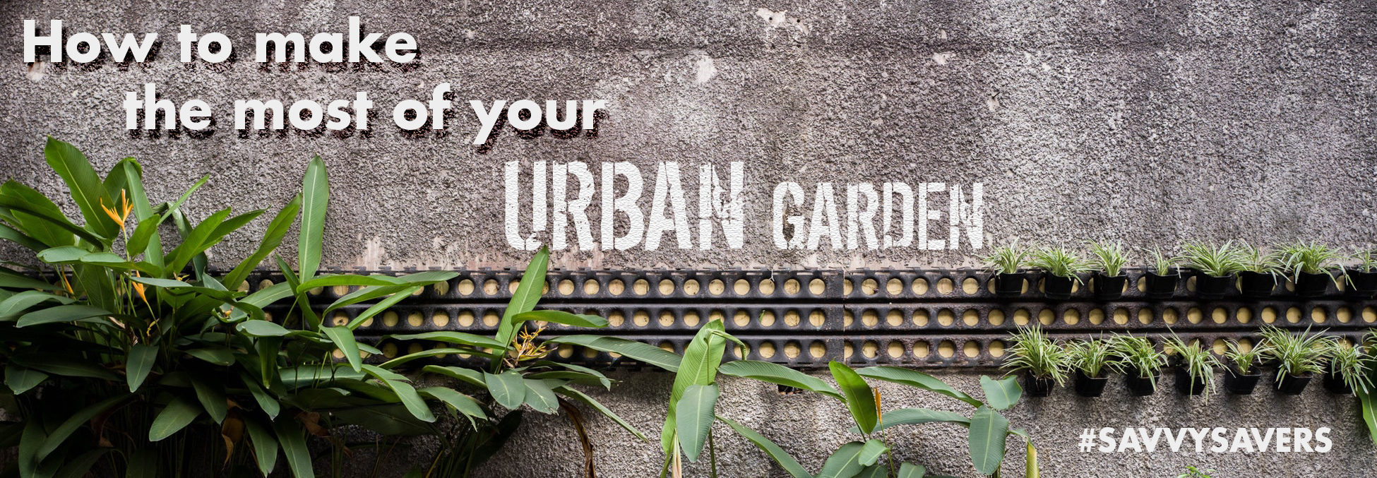 How To Make The Most of Your Urban Garden